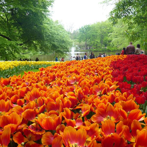 Dubois_Jardins-creations-Blog-Visite_Tulipes_Hollande-01