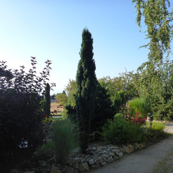 Dubois_Jardins-entretien-entretien_des_plantes-09