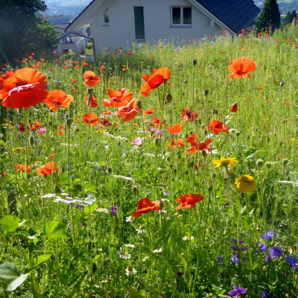 Home-Dubois_Jardins_Le_Vaud-2018-1920-10