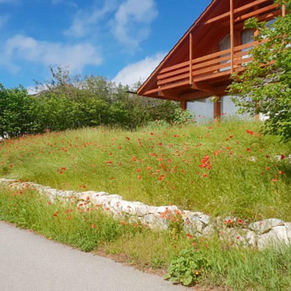 création secteur pelouse et prairie 02